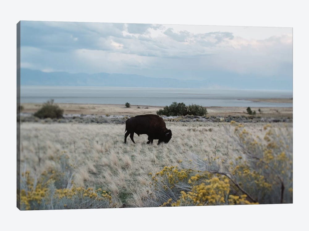 Bison In The Field by Chelsea Victoria 1-piece Canvas Print