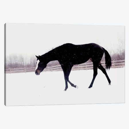 Black Horse In The Snow Canvas Print #CVA152} by Chelsea Victoria Canvas Art