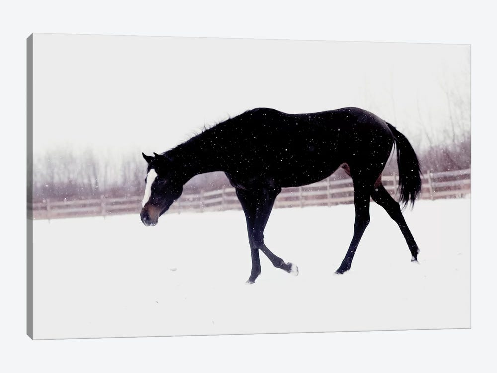 Black Horse In The Snow by Chelsea Victoria 1-piece Canvas Wall Art