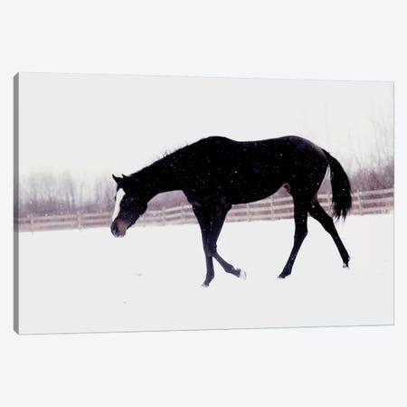 Black Horse In The Snow Canvas Print #CVA152} by Chelsea Victoria Canvas Art