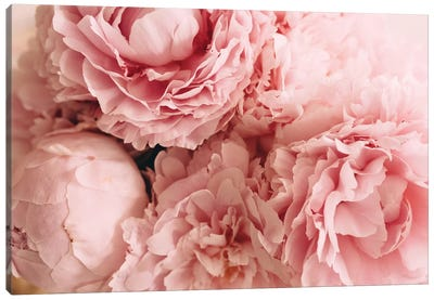 Blush Peonies Canvas Art Print