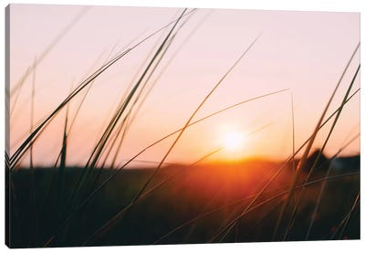 Cape Cod Meadow Canvas Art Print