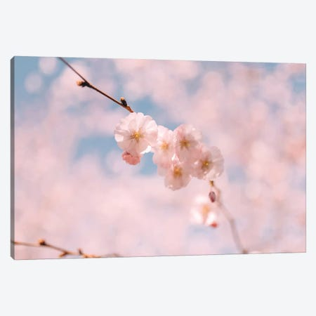 Cherry Blossom I Canvas Print #CVA155} by Chelsea Victoria Canvas Print