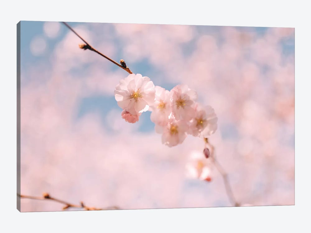 Cherry Blossom I by Chelsea Victoria 1-piece Canvas Art Print