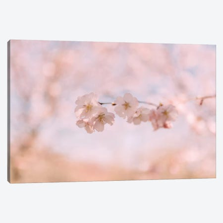 Cherry Blossom II Canvas Print #CVA156} by Chelsea Victoria Canvas Art Print
