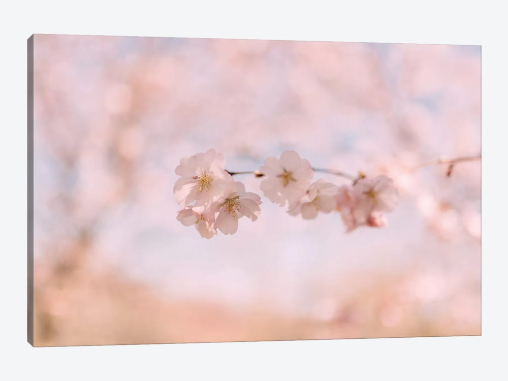 Cherry Blossom II by Chelsea Victoria 1-piece Canvas Artwork