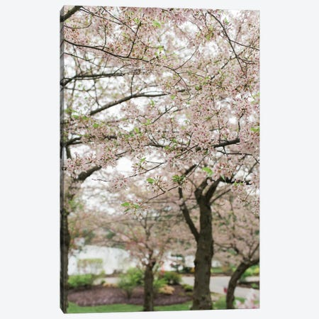 Cherry Blossoms Canvas Print #CVA157} by Chelsea Victoria Canvas Print