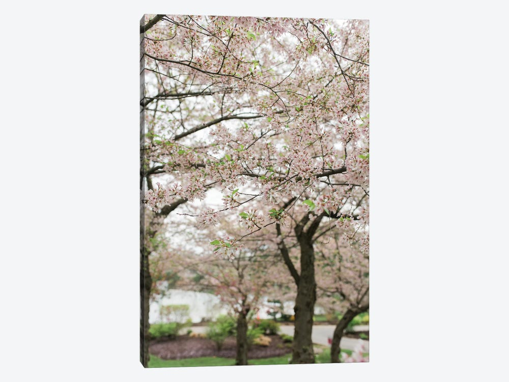 Cherry Blossoms by Chelsea Victoria 1-piece Canvas Art Print
