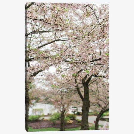 Cherry Blossoms Canvas Print #CVA157} by Chelsea Victoria Canvas Print