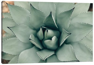 Mint Succulent I Canvas Art Print