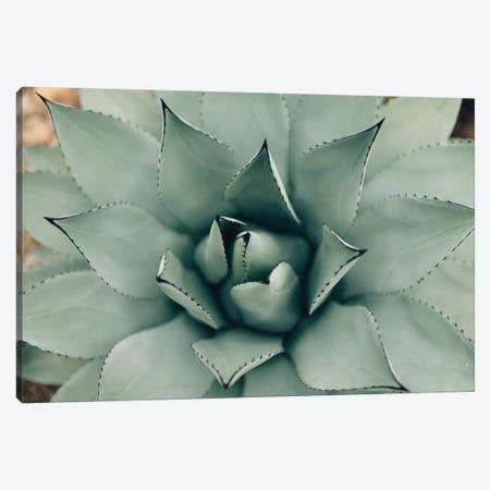 Mint Succulent I Canvas Print #CVA163} by Chelsea Victoria Canvas Print