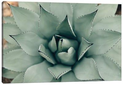 Mint Succulent I Canvas Art Print