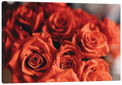 Orange Roses Canvas Art Print