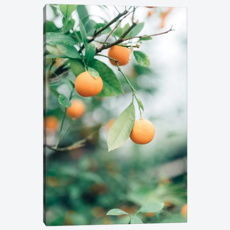 Orange Tree Canvas Print #CVA167} by Chelsea Victoria Canvas Art