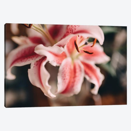 Pink Lilies II Canvas Print #CVA174} by Chelsea Victoria Art Print