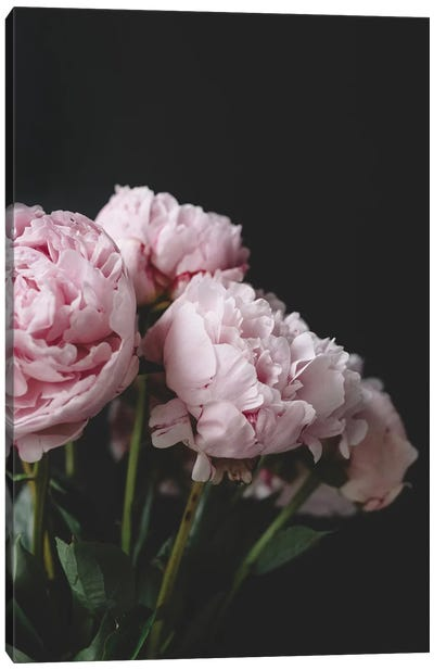 Pink Peonies On Black I Canvas Art Print
