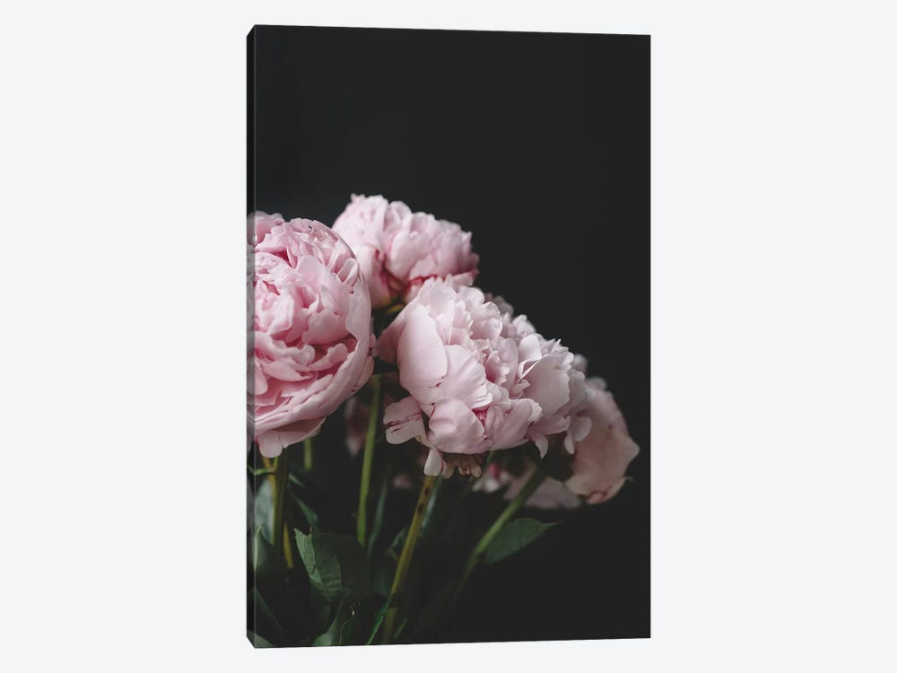 Pink Peonies On Black I by Chelsea Victoria 1-piece Canvas Wall Art