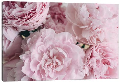 Pink Peonies Top Canvas Art Print