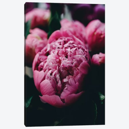 Purple Peony Canvas Print #CVA186} by Chelsea Victoria Canvas Artwork