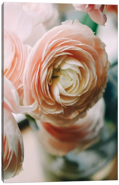 Ranunculus I Canvas Art Print