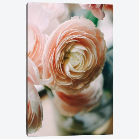 Ranunculus I Canvas Print #CVA188} by Chelsea Victoria Canvas Print