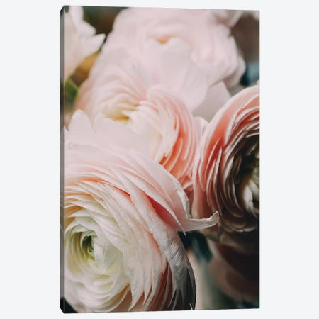 Ranunculus II Canvas Print #CVA189} by Chelsea Victoria Canvas Art Print