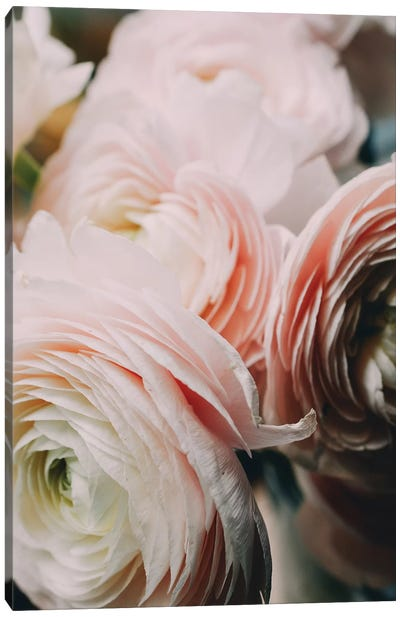 Ranunculus II Canvas Art Print
