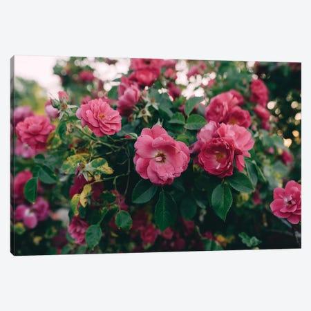Rose Bush I Canvas Print #CVA191} by Chelsea Victoria Canvas Artwork
