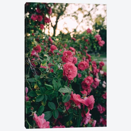 Rose Bush II Canvas Print #CVA192} by Chelsea Victoria Canvas Wall Art