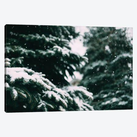 Snow Song Canvas Print #CVA195} by Chelsea Victoria Canvas Print