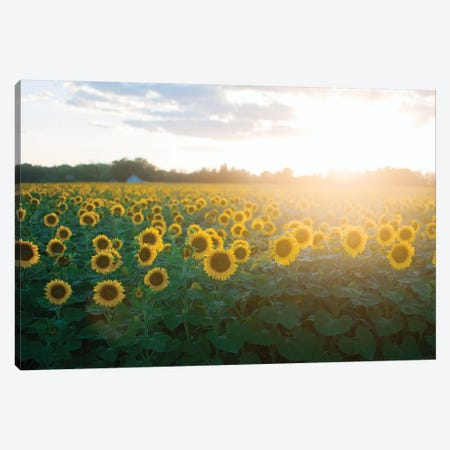 Sunflower Field I Canvas Print #CVA198} by Chelsea Victoria Canvas Art