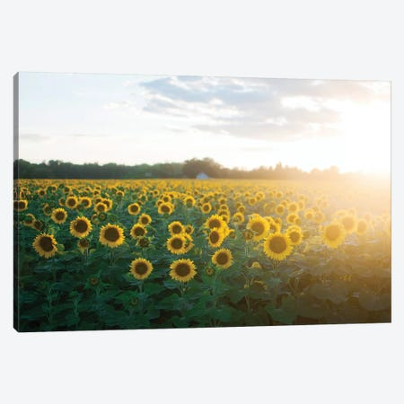 Sunflower Field II Canvas Print #CVA199} by Chelsea Victoria Canvas Wall Art