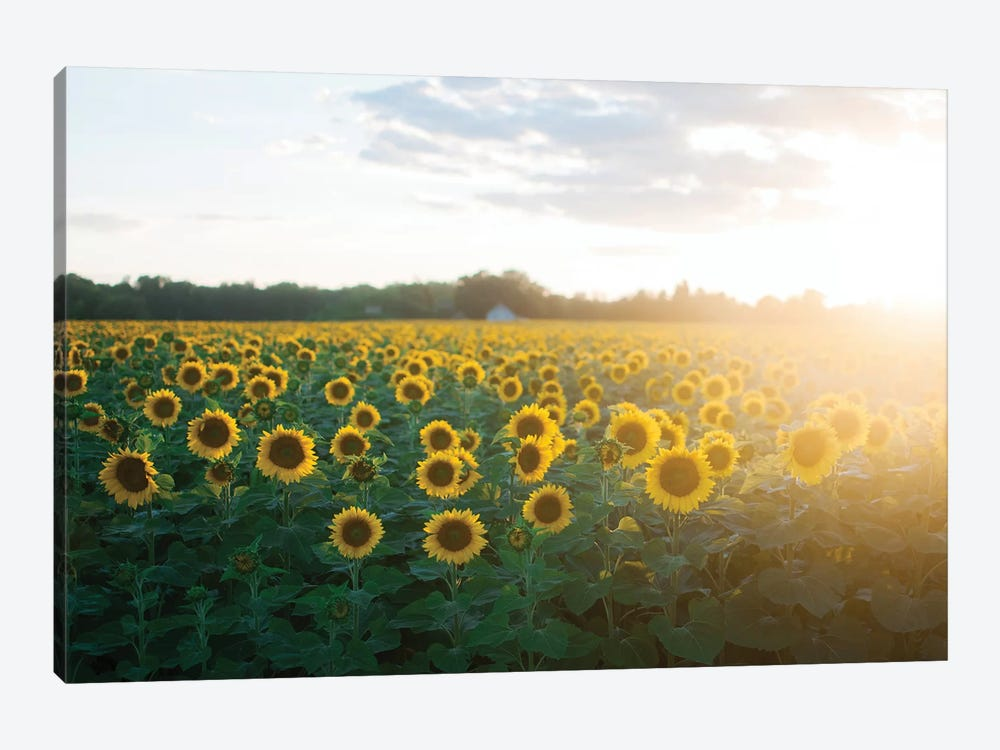 Sunflower Field II by Chelsea Victoria 1-piece Canvas Print