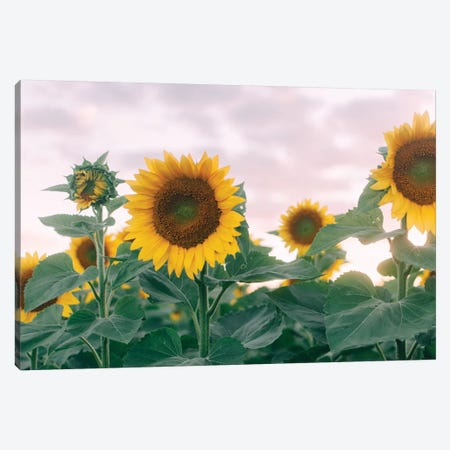Sunflowers At Sunset I Canvas Print #CVA200} by Chelsea Victoria Canvas Art