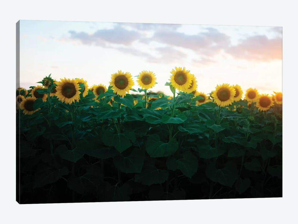 Sunflowers At Sunset II by Chelsea Victoria 1-piece Canvas Art