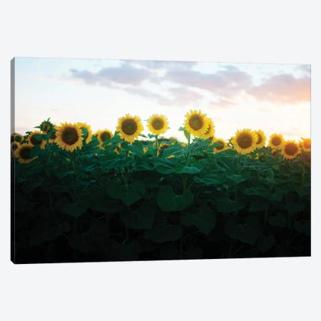 Sunflowers At Sunset II Canvas Print #CVA201} by Chelsea Victoria Canvas Art