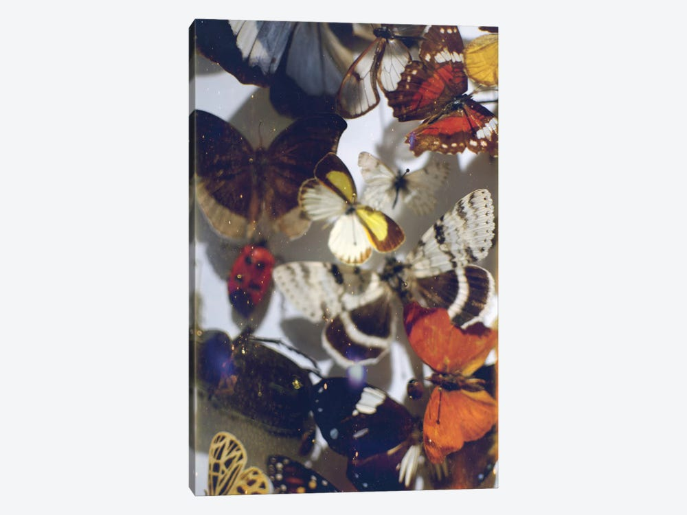 The Butterfly Collection by Chelsea Victoria 1-piece Art Print