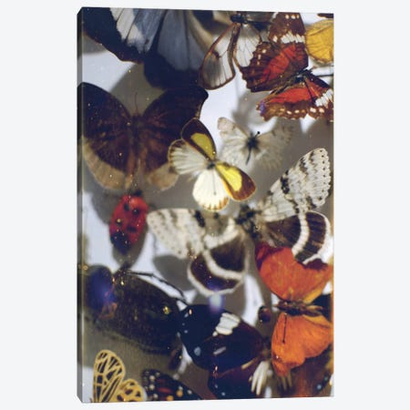 The Butterfly Collection Canvas Print #CVA202} by Chelsea Victoria Canvas Art