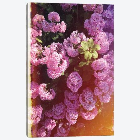 Vintage Hydrangea Canvas Print #CVA207} by Chelsea Victoria Art Print