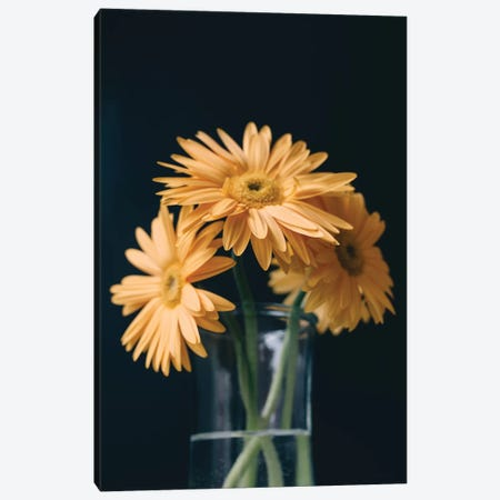 Yellow Daisies I Canvas Print #CVA210} by Chelsea Victoria Art Print