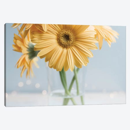 Yellow Daisies II Canvas Print #CVA211} by Chelsea Victoria Art Print