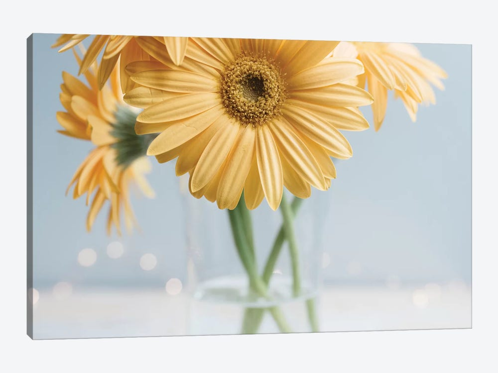 Yellow Daisies II by Chelsea Victoria 1-piece Canvas Print