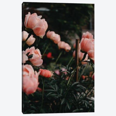 Coral Peonies Canvas Print #CVA222} by Chelsea Victoria Canvas Artwork