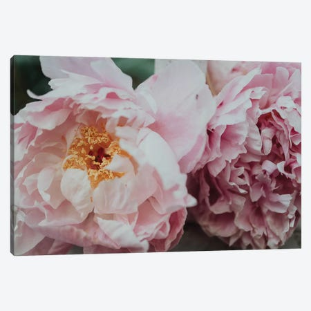 Pink Peonies In The Spring Canvas Print #CVA226} by Chelsea Victoria Canvas Print
