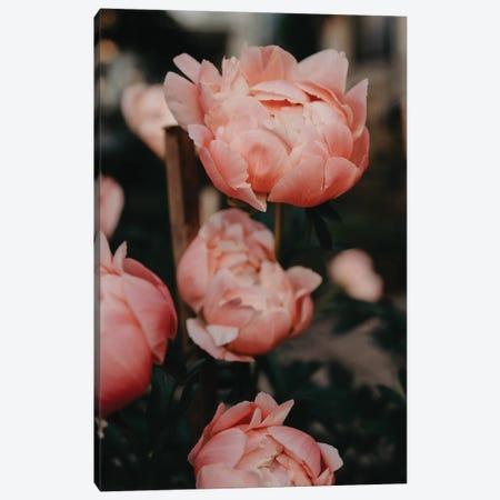 Peony Garden Canvas Print #CVA227} by Chelsea Victoria Canvas Print