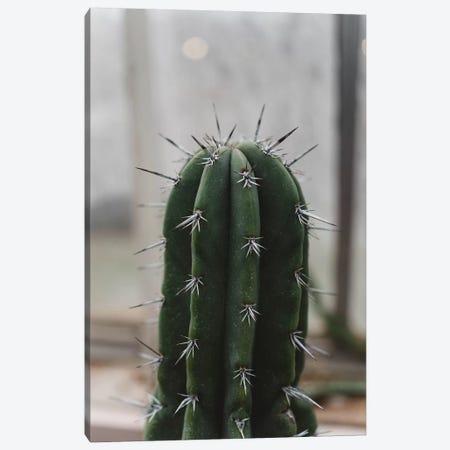 Prickly Cactus Canvas Print #CVA230} by Chelsea Victoria Canvas Print