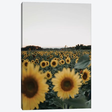Root And Bloom Canvas Print #CVA243} by Chelsea Victoria Canvas Artwork