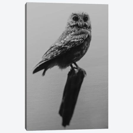 Curious Owl Canvas Print #CVA279} by Chelsea Victoria Art Print