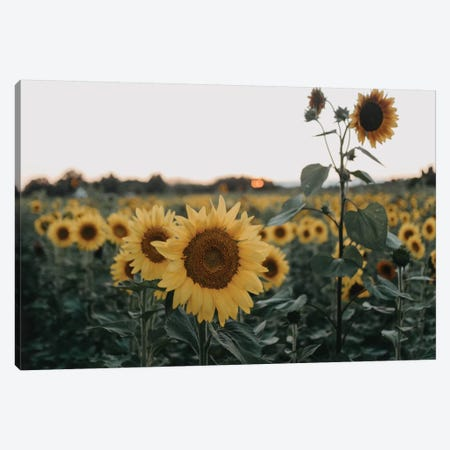 The Sunflowers Canvas Print #CVA280} by Chelsea Victoria Canvas Art