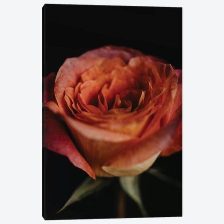 Ombre Rose Canvas Print #CVA281} by Chelsea Victoria Canvas Wall Art